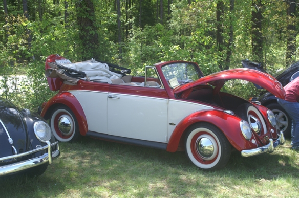 This 61 beetle was at the top of the many beautiful bugs in attendance.